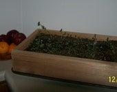 Cedar Seedling / Herb Garden / Seeding Starter Garden Box Planter