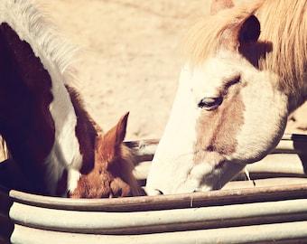 Horses Photograph - fine art print - 8x10 photograph - vintage horse portrait - western home decor - spring decor