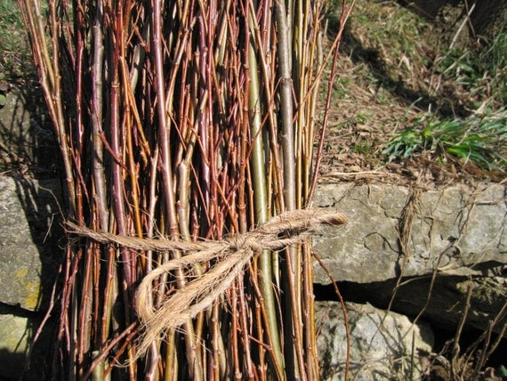 Basket Weaving With Willow Branches : Hand harvested willow branches for basket weaving