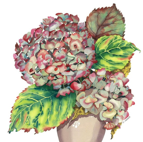 botanical flower watercolor autumn hydrangea limited edition. Black Bedroom Furniture Sets. Home Design Ideas