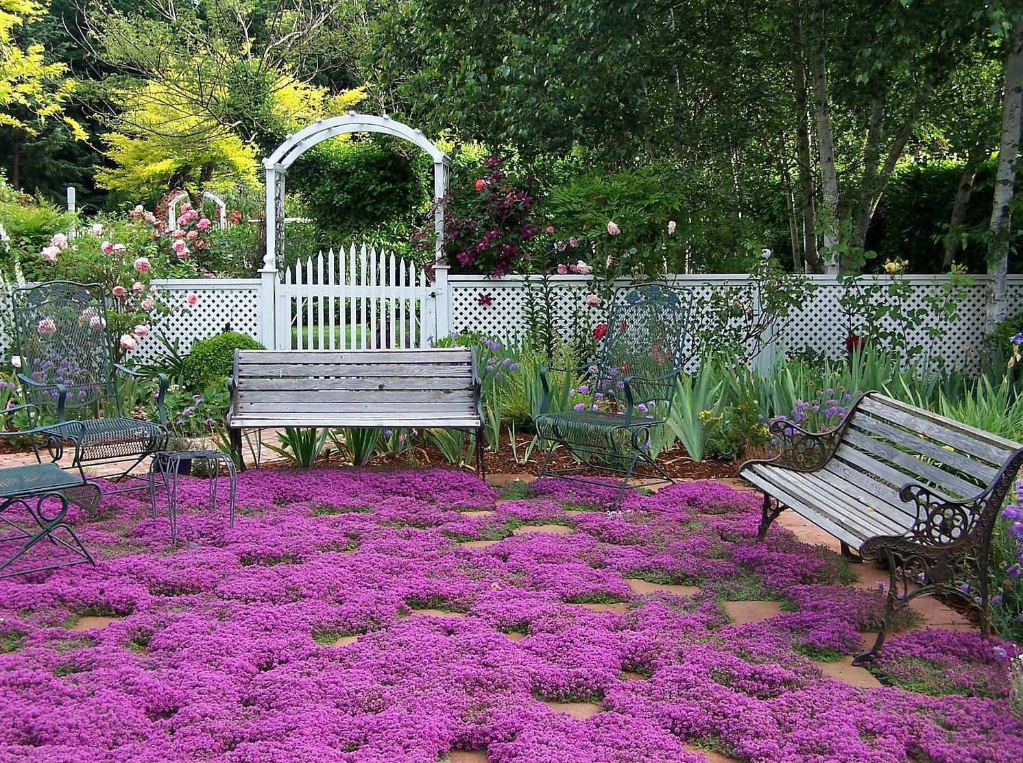 creeping thyme ground cover 1000 seeds fragrant herb pink. Black Bedroom Furniture Sets. Home Design Ideas