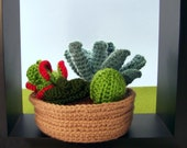 Crochet Succulent Garden