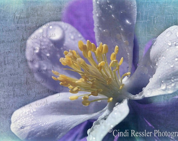 Columbine, Fine Art Photography, Flower Photography, Floral Photography