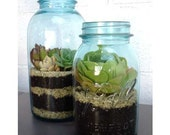 Create your own mason jar terrarium