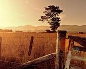 New Zealand sunset, field and mountains, summer sunset wall art