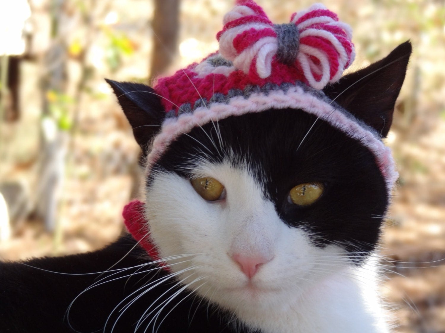 Valentines Day Cat Hat Valentine Hats for Cats Valentine Cat
