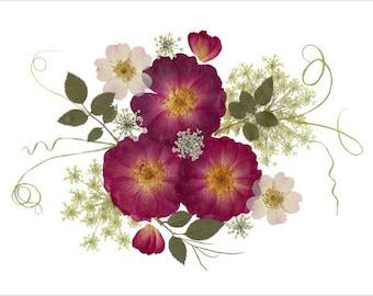 Set of 6 Pressed Flower Cards - Roses - Notecards