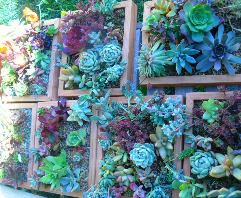 Custom order for carie living wall art kit vertical garden for Vertical wall garden kits
