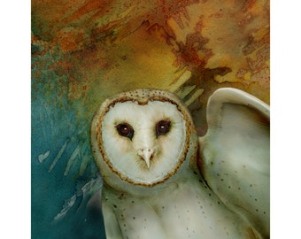 Barn Owl 5 signed fine art print 8x8 Bird lover gift Nature