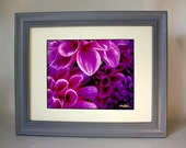 Ever Lasting Flowers Pink in New Gray Frame 13 1/2 x 15