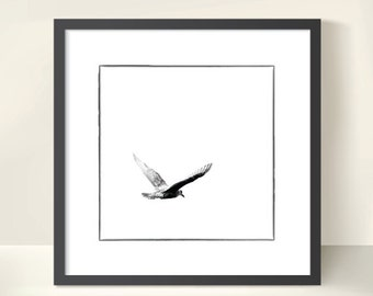 Seagull in Flight. Monochrome. Nature Photography. Black & White Print by OneFrameStories.