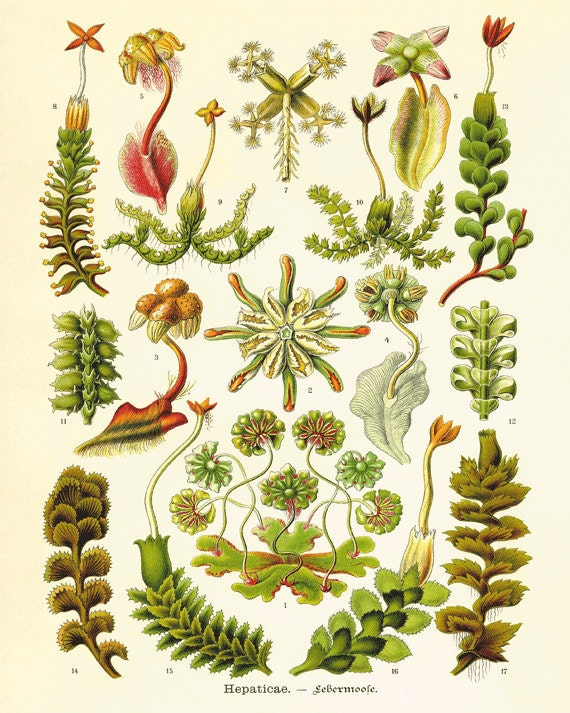 Sea plants art print vintage old prints nautical art print for Vintage ocean decor