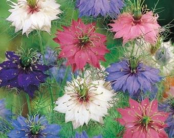 Love in a mist flower,love in a mist seeds, flower seeds,mix nigella seeds, damascena seeds,200,nigella flower,gardening