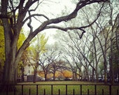 Fall Trees in Manhattan - 5x5 Print - Autumn Colors in the Trees Lining the Museum of Natural History - Fine Art Photograph