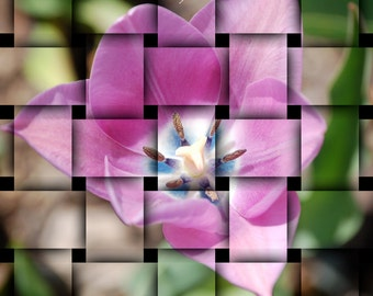 DIGITAL DOWNLOAD, Tulip Basket Weave, Pink and Green Photo, Abstract Flower, stock photo, available in print