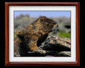 Marmot Print - 8x10 Marmot Photograph - Wildlife Photograph - Wildlife Print (P4)