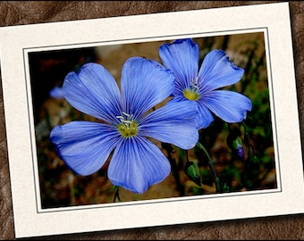 3 Wildflower Photo Note Cards - Flower Note Cards - 5x7 Flower Cards - Flower Blank Note Cards - Wildflower Greeting Cards (IN2)
