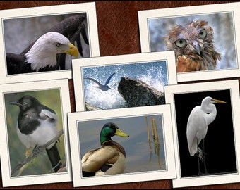 6 Bird Photo Note Cards - Bird Note Card Set - 5x7 Bird Cards - Bird Greeting Card Handmade - Bird Greeting Card Set (GP60)