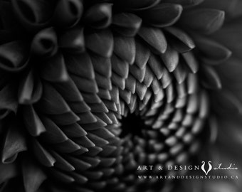 Black and White Photography, Flower Photo, Black Dahlia, BW Photo, Living Room Art, Flower Prints