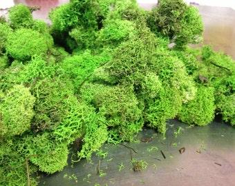 Reindeer Moss, Moss, Preserved Moss, Moss Decor, DIY Moss, Bag of Moss 4 oz, Moss Vase Filler