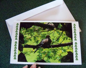 Lone Mourning dove note card