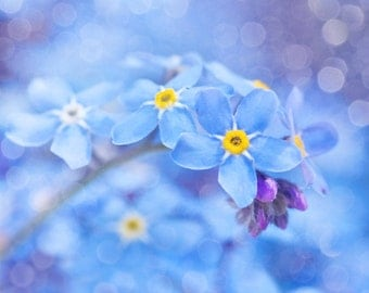 Nature photography, Forget-me-nots, Myosotis, Flower, Blue, Violet, Wild, Wall Art, Home Decor.