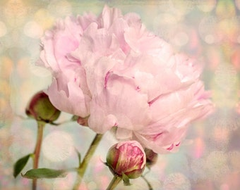 Nature photography, Peony, Flower, Bud, Pink, Shabby chic, Wall Art, Home Decor.