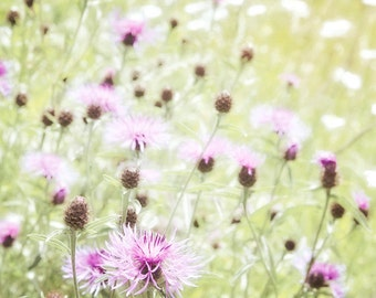 Nature Photography, Wild flowers, Meadow, Summer, Fine Art print, Home Decor.