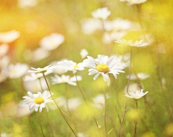 Nature photography, Daisies, Wild Flowers, Yellow, Meadow, Wall Art, Home Decor.