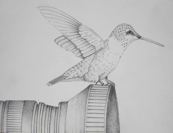 Pin Colibri Blanco Y Negro Images To Pinterest
