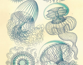 Antique Jellyfish art Sea beach art Ocean art nautical print nature wall art beach home decor art antique wall art vintage Victorian print