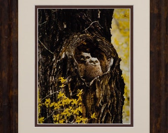 Limied Editon Fine Art Photograph - Love Nest
