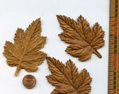 LEATHER MAPLE LEAVES (2) Die Cut and Embossed for Millinery, Hats, Jewelry, Assemblage MoRE AVAiLABLE