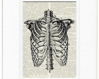 18oo's human thorax print