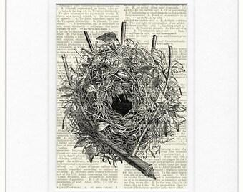 bird nest IV print