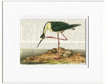 Audubon Bird, Blacknecked Stilt print