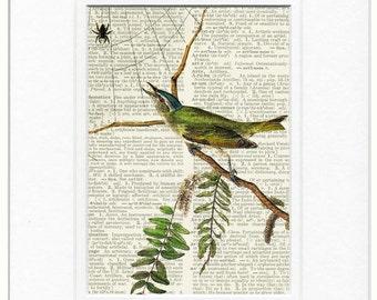 Audubon grummet bird print