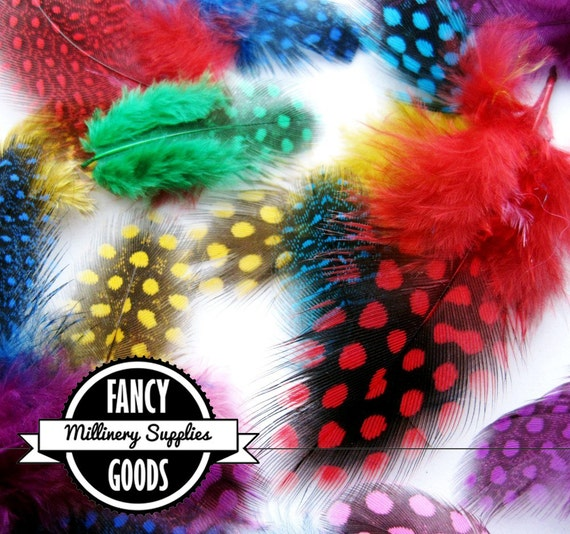 20 - Rainbow - Guinea Feathers - Spotted - Dotted