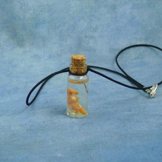 Bird Embryo Specimen Jar Necklace, Handmade Jewelry