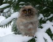 Needle Felted  Wool  Owl. Felt Owl . Owl Figurine. Baby owl.