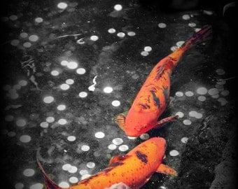 KOI FOUNTAIN Original Color Art Photograph