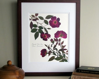 Pressed flowers print, 11x14 double matted, Knock Out Rose, deep red maroon rose, botanical garden, wall decor no. 0025