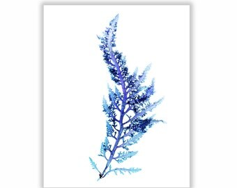 Seaweed Print Vibrant Blue Botanical Artwork, Ocean, Sea, Coastal Living, Beach, 8x10, Wall Decor, Matted Print