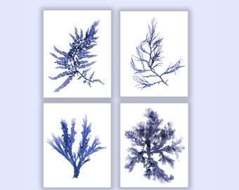 Large Set of Four, Seaweed Prints Navy Blue Botanical Artwork, Ocean, Coastal Living, Beach, Wall Decor, 11x14