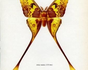 Vintage Moth Print, (71) Doubleday, Prochazka, 1966, Butterfly, Lepidoptera, Natural History, Frameable Art
