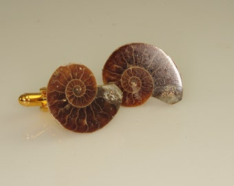 Ammonite Fossil Cuff Links Beautiful OOAK 24 mm   L-42