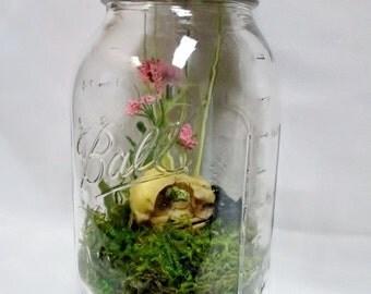 CURIOSITY MASON JAR - Resin Eagle Skull Artificial Terrarium - Specimen Jar, Bizarre, Oddities, Cabinet of Curiosities