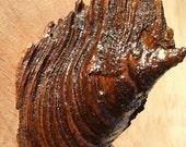 Pine Coat Rack