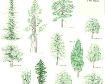 12 Trees and Plants - PAPER Clippings for collage or scrapbooking - Vintage paper cut-outs from 1960s - Nature, trees, forest