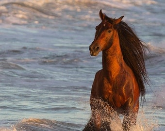 Ocean Horse at Sunset - Fine Art Horse Photograph - Horse - Andalusian